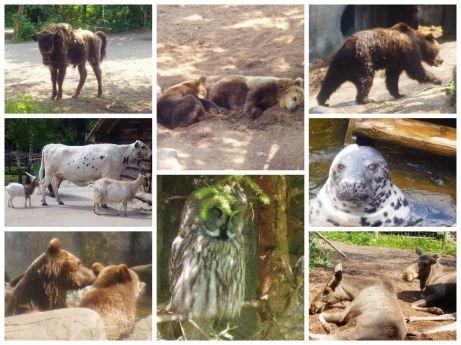 skansen animals